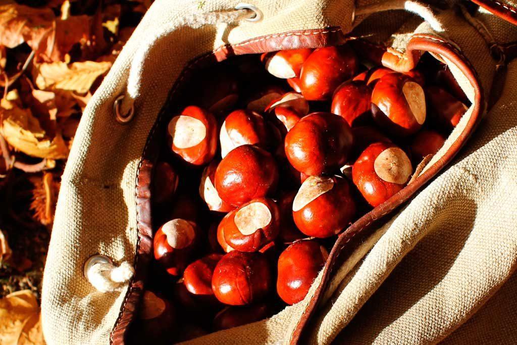 zbieranie kasztanów, jesień