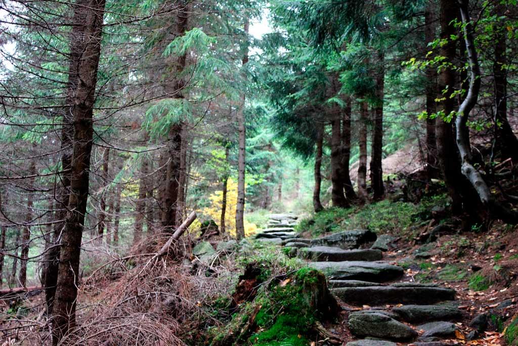 wycieczka górska w czeskie karkonosze
