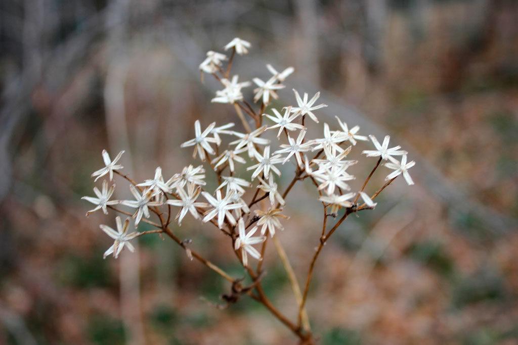 flora zimą, piękne chwasty